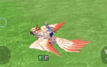 创造与魔法云斑鹦鸟位置